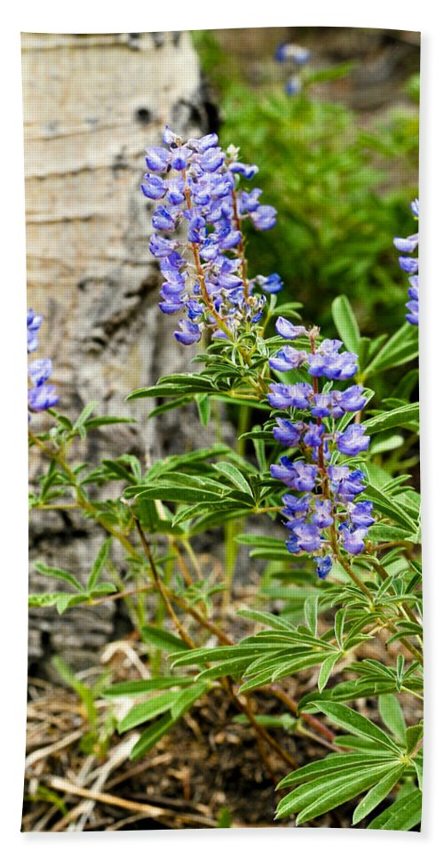Lupine Beach Towel featuring the photograph Lovely Lupine by Marilyn Hunt