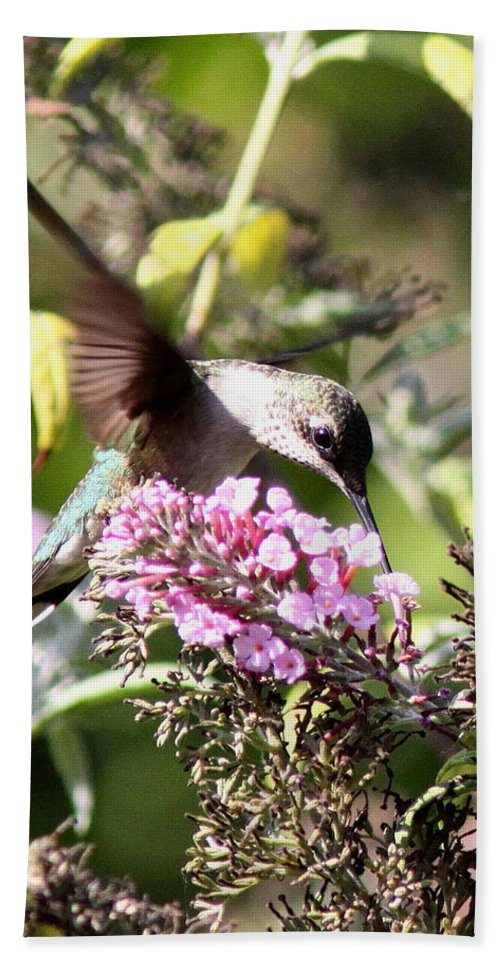 Hummingbird Beach Towel featuring the photograph Lunch To Go by Travis Truelove