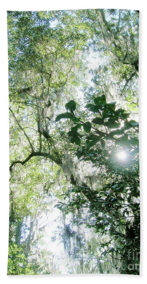 Swamp Beach Towel featuring the digital art Magnolia Plantation Sc by Lizi Beard-Ward