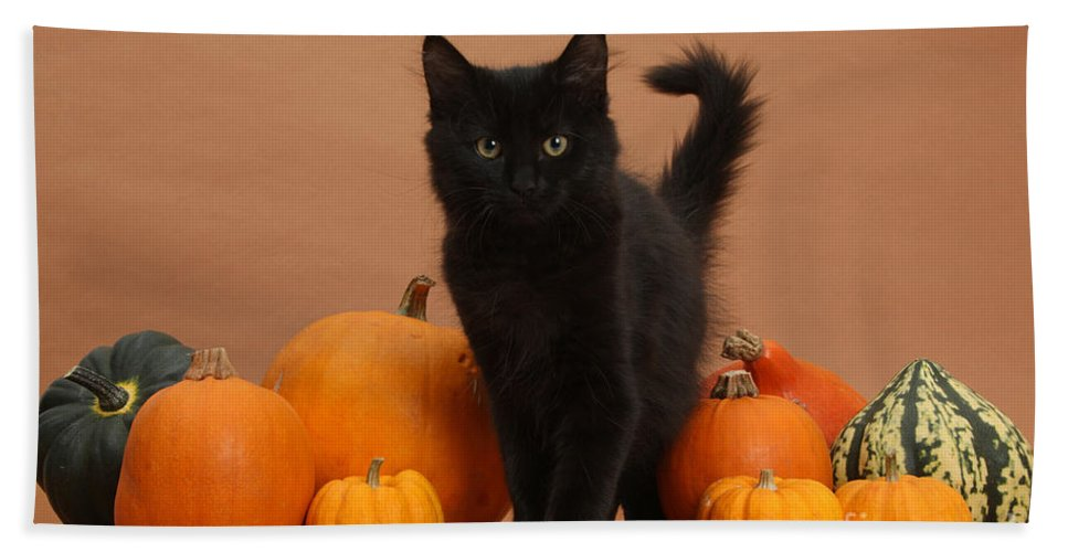 Animal Beach Towel featuring the photograph Maine Coon Kitten And Pumpkins by Mark Taylor