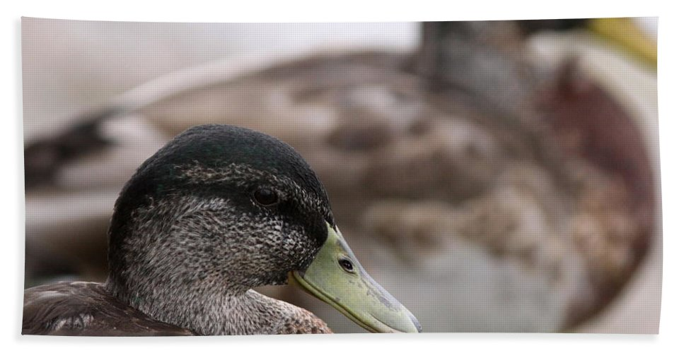 Nature Beach Towel featuring the photograph Mallard - Front And Rear by Travis Truelove