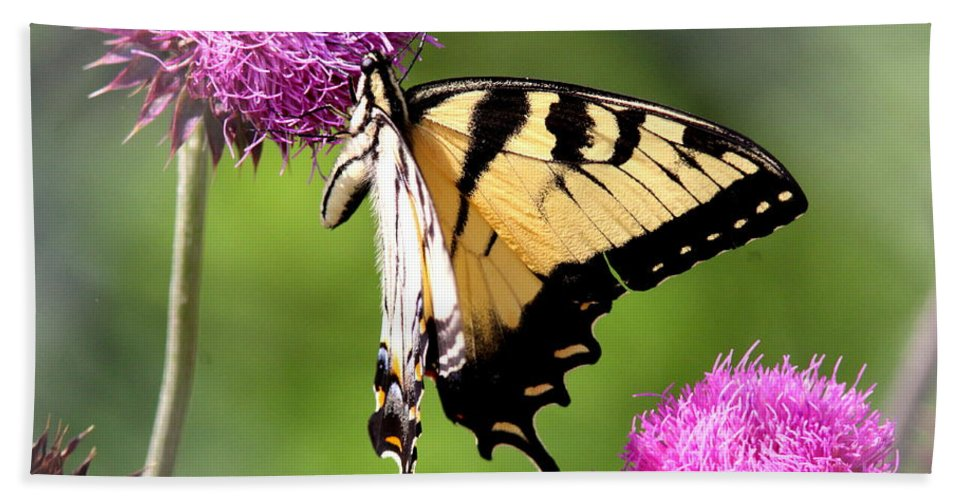 Goldenrod Beach Towel featuring the photograph Many Colors by Travis Truelove
