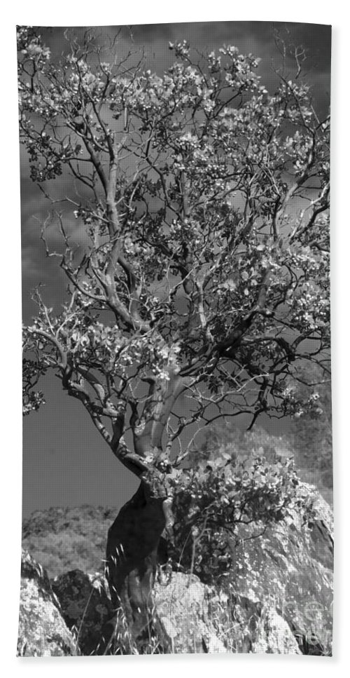 Knights Ferry Beach Towel featuring the photograph Manzanita Outcrop by Jim And Emily Bush