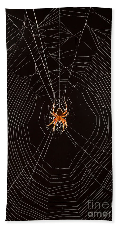 Animal Beach Towel featuring the photograph Marbled Orb Weaver Spider by Ted Kinsman