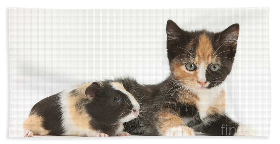 Animal Beach Towel featuring the photograph Matching Kitten & Guinea Pig by Mark Taylor
