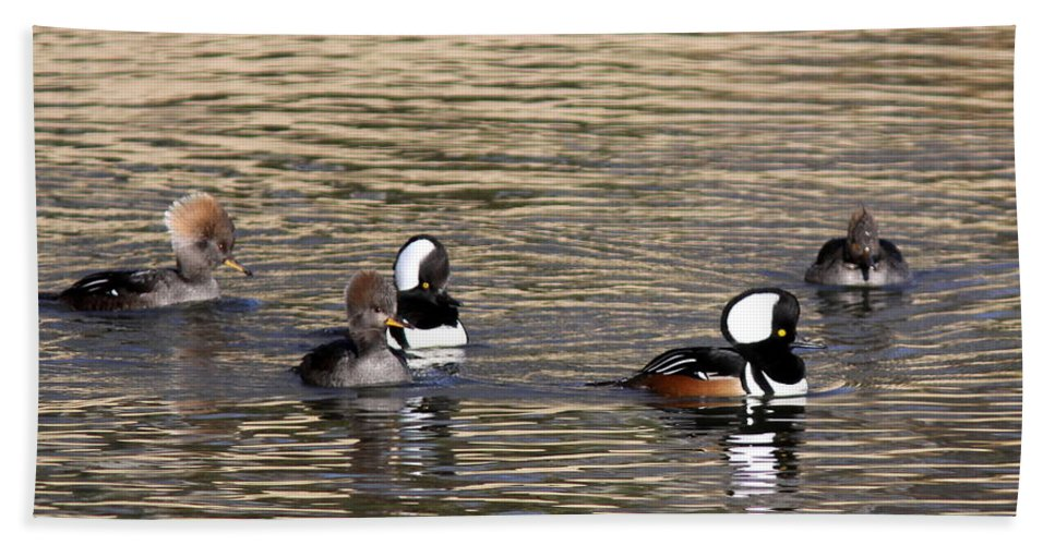 Hooded Merganser Beach Towel featuring the photograph Mergansers Making Waves by Travis Truelove