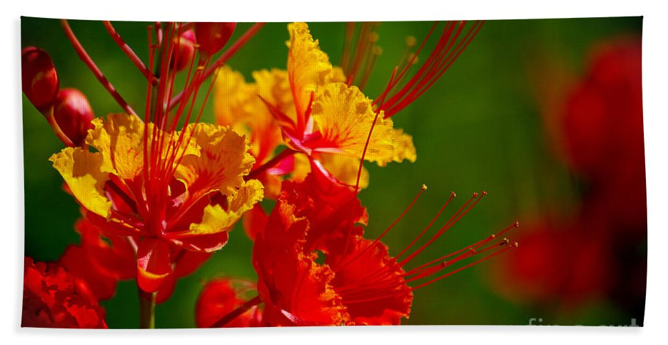 Photography Beach Towel featuring the photograph Mexican Bird Of Paradise by Vicki Pelham