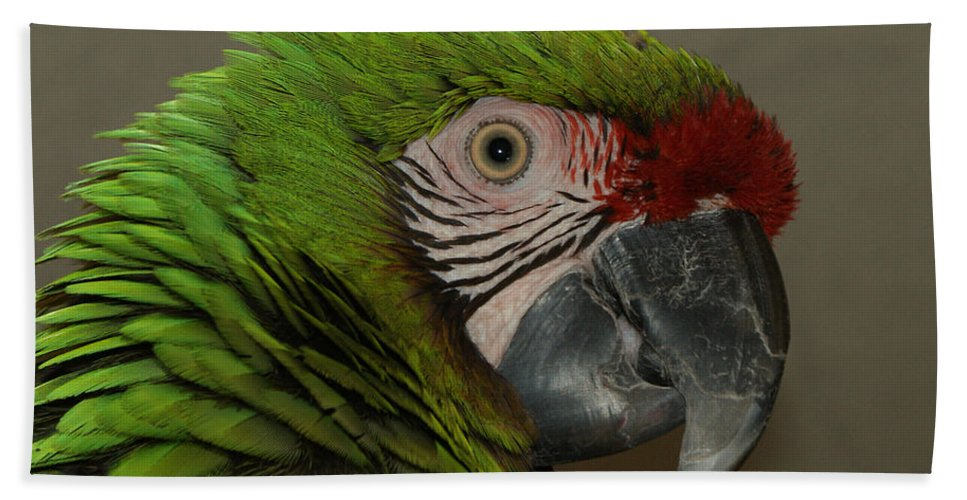Military Macaw Beach Towel featuring the photograph Military Macaw by Ernie Echols