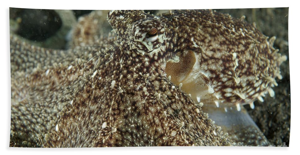Cephalopod Beach Towel featuring the photograph Mimic Octopus Head, North Sulawesi by Mathieu Meur