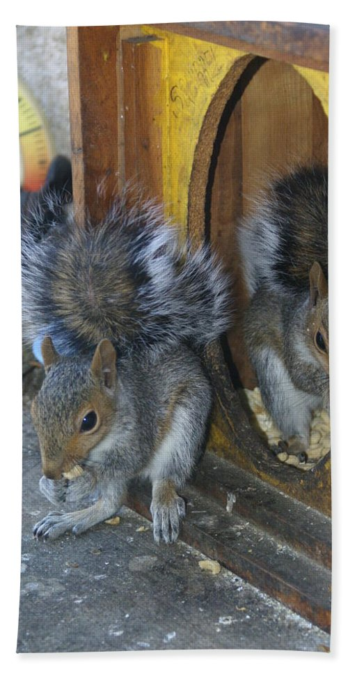 Squirrels Beach Towel featuring the photograph Mirror Image by Ben Upham III