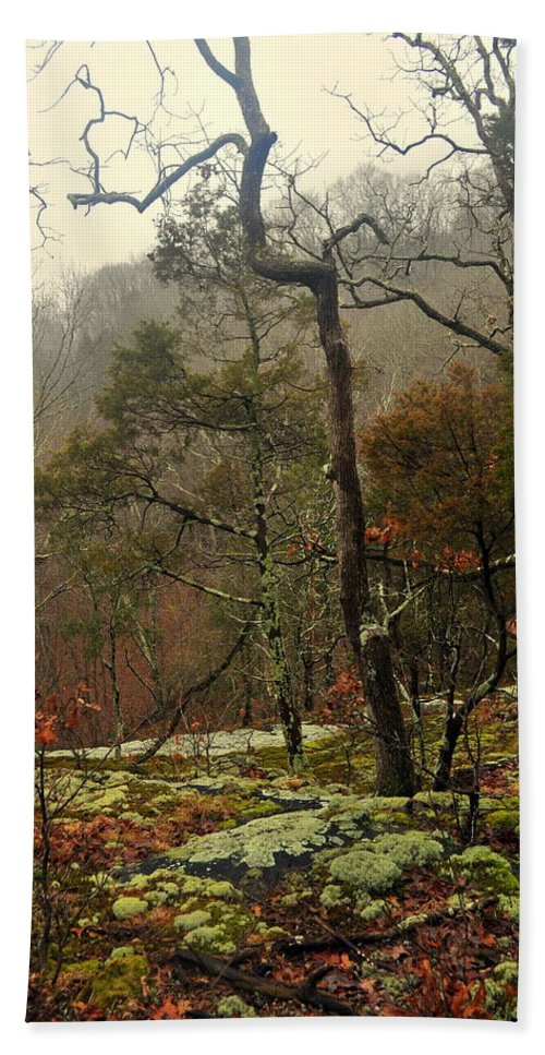Tree Beach Towel featuring the photograph Misty Tree by Marty Koch