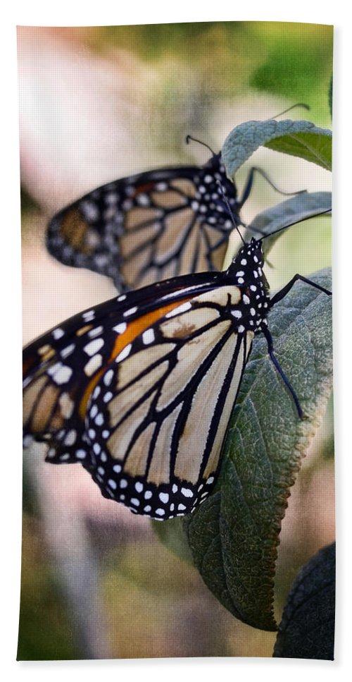 Monarch Butterflies Beach Towel featuring the photograph Monarch Butterflies by Saija Lehtonen
