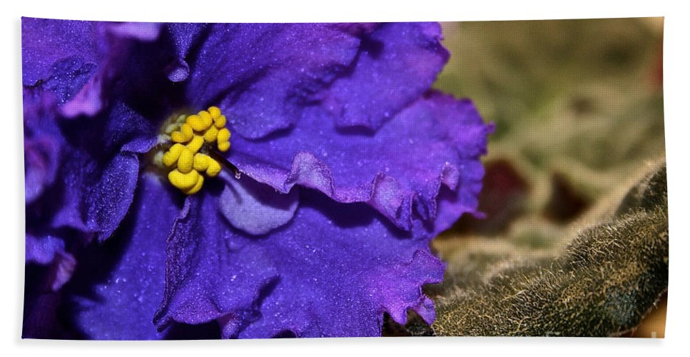 Outdoors Beach Towel featuring the photograph Monster Violet by Susan Herber