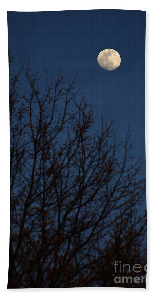 Moon Beach Towel featuring the photograph Moon And Trees by Mike Nellums