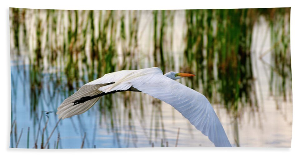 Morning Beach Towel featuring the photograph Morning Flight by Bill Dodsworth