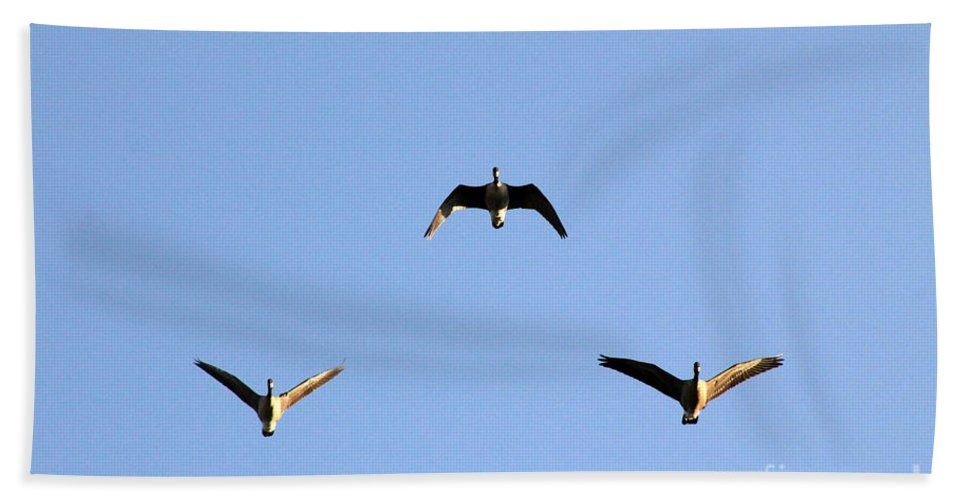 Poster Beach Towel featuring the photograph Morning Formation by Alycia Christine