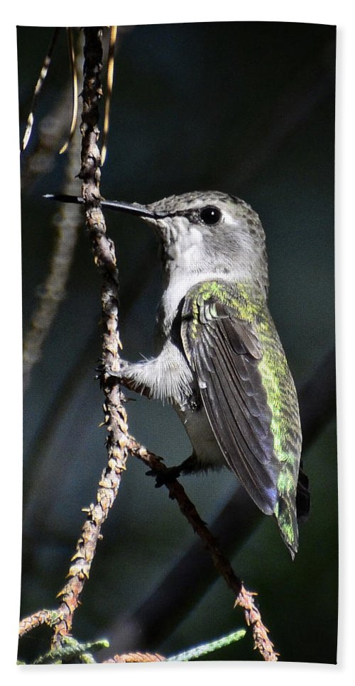 Hummingbird Beach Towel featuring the photograph Morning Light by Saija Lehtonen
