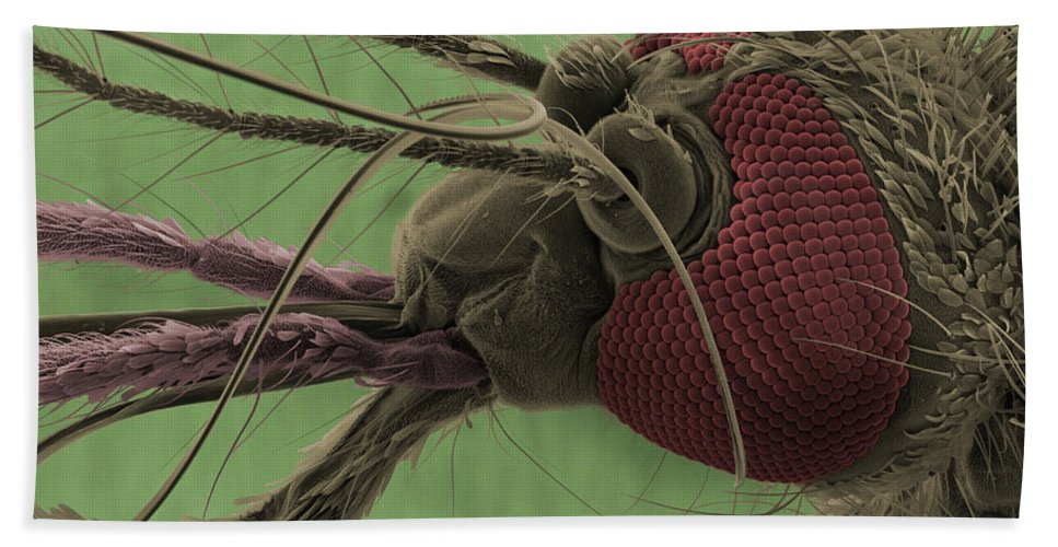 Mosquito Beach Towel featuring the photograph Mosquitos Head, Sem by Ted Kinsman