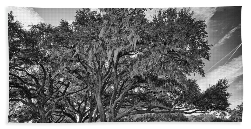Beaufort County Beach Towel featuring the photograph Moss-draped Live Oaks by Phill Doherty
