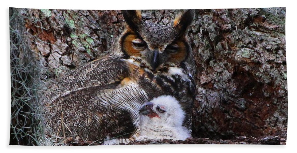 Great Horned Owl Beach Towel featuring the photograph Mother And Baby Owl by Barbara Bowen