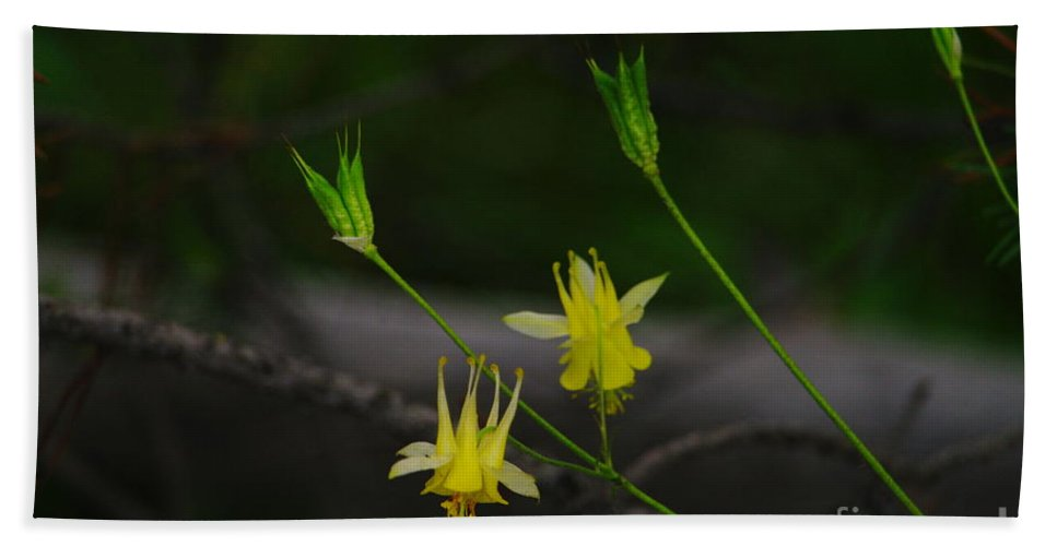 Flowers Beach Towel featuring the photograph Mountain Wildflowers by Jeff Swan