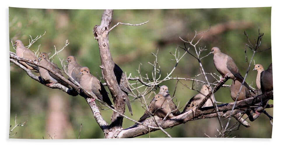 Nature Beach Towel featuring the photograph Mourning Dove - Board Of Directors by Travis Truelove