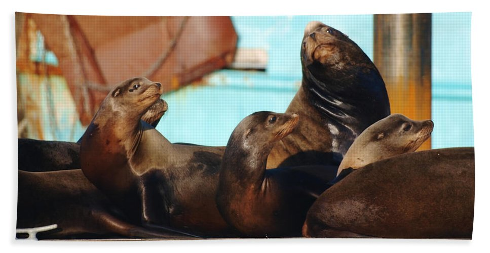 Seal Beach Towel featuring the photograph My Best Side by Teri Schuster