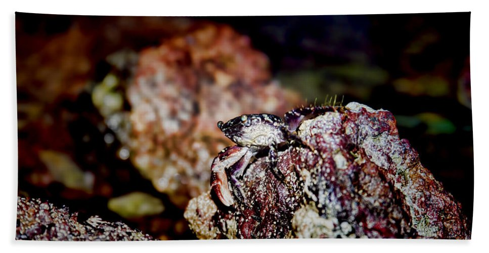 Crab Beach Towel featuring the photograph My Turf by Douglas Barnard