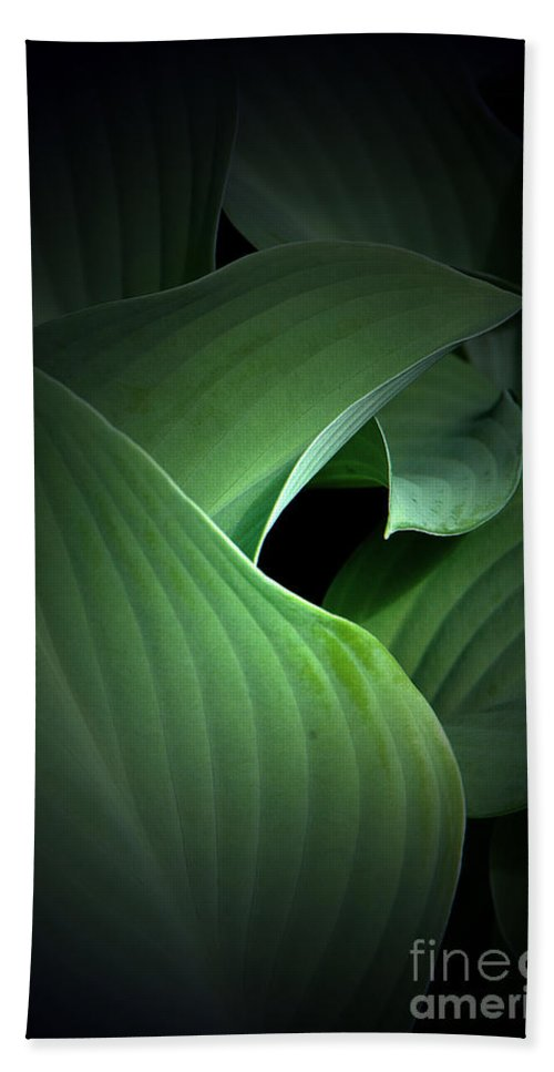 Mysterious Beach Towel featuring the photograph Mysterious Hostas by Mike Nellums