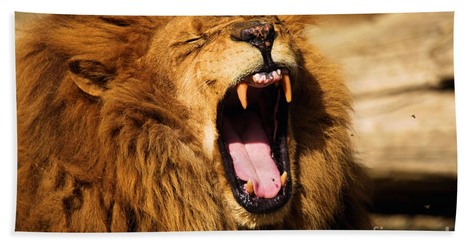 Lion Beach Towel featuring the photograph Nap Time by Adam Jewell