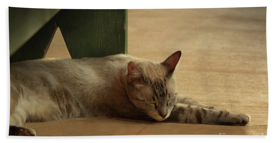 Cat Beach Towel featuring the photograph Naping In The Shade by Kim Henderson