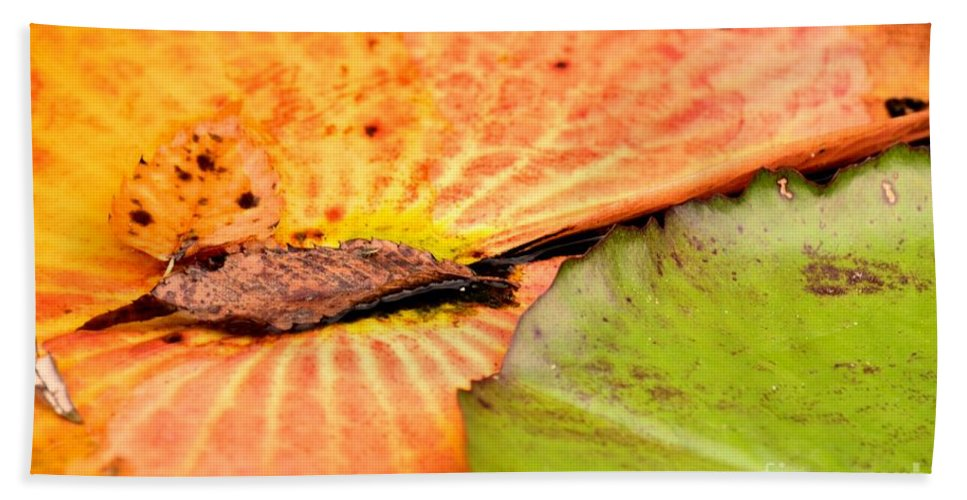 Natural Beach Towel featuring the photograph Natural Abstract 40 by Maria Urso