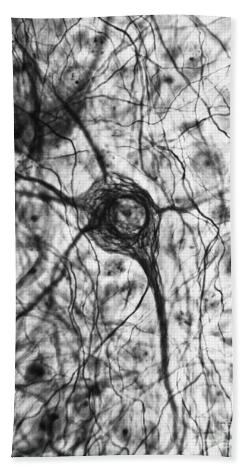 Cell Beach Towel featuring the photograph Neuron, Tem by Omikron