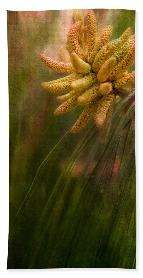 Pine Beach Towel featuring the photograph New Pines Cones In Spring by Chris Lord