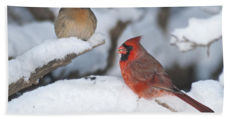 Birds Beach Towel featuring the photograph Northern Cardinal Pair 4284 2 by Michael Peychich