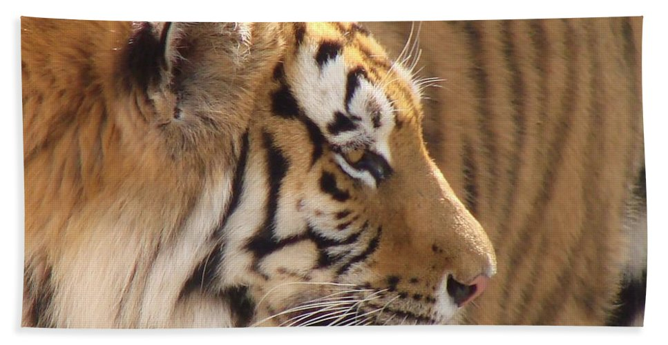 Tiger Beach Towel featuring the photograph Not Looking At You by Margaret Bobb
