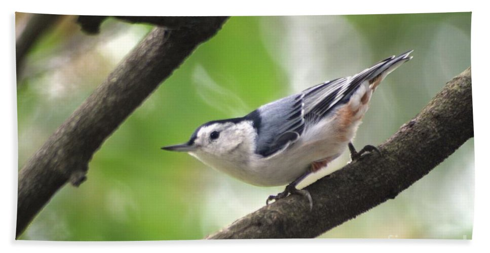 Birds Beach Towel featuring the photograph Nuthatch by Living Color Photography Lorraine Lynch