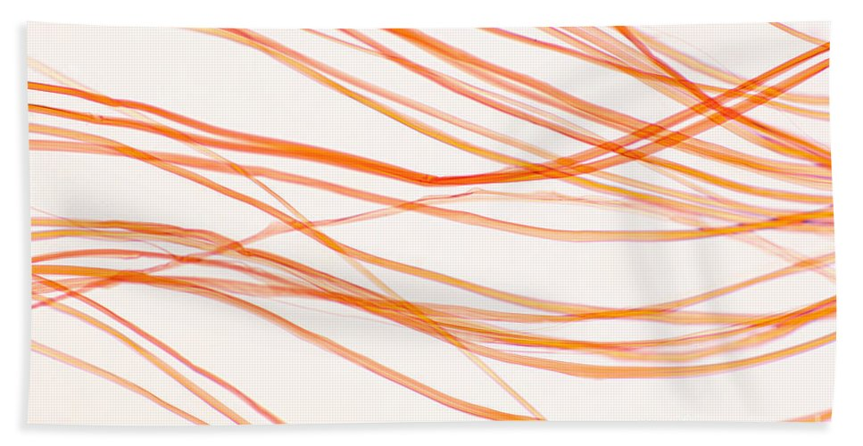 Fiber Beach Towel featuring the photograph Nylon Fibers by Ted Kinsman