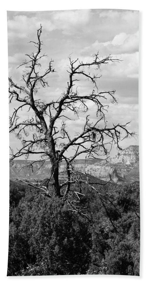 Arizona Beach Towel featuring the photograph Oak Creek Tree by Lauri Novak