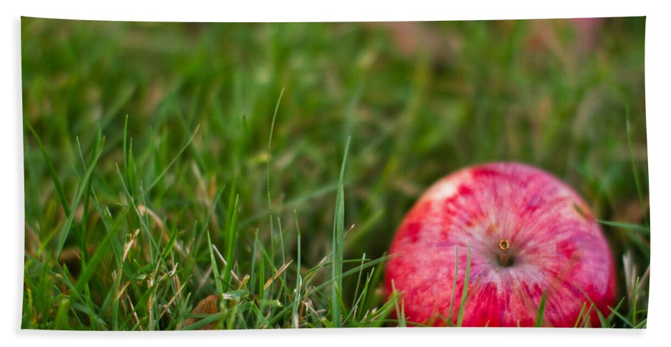 Apple Beach Towel featuring the photograph October Apple by Danielle Silveira