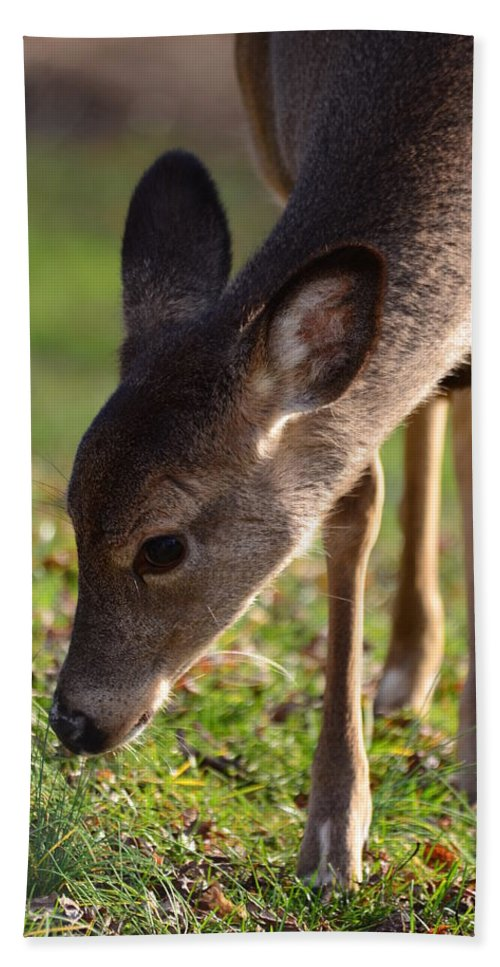Fawn Beach Towel featuring the photograph Oh So Sweet by Lori Tambakis