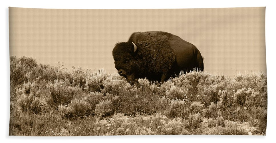 Buffalo Beach Towel featuring the photograph Old Timer by Shane Bechler