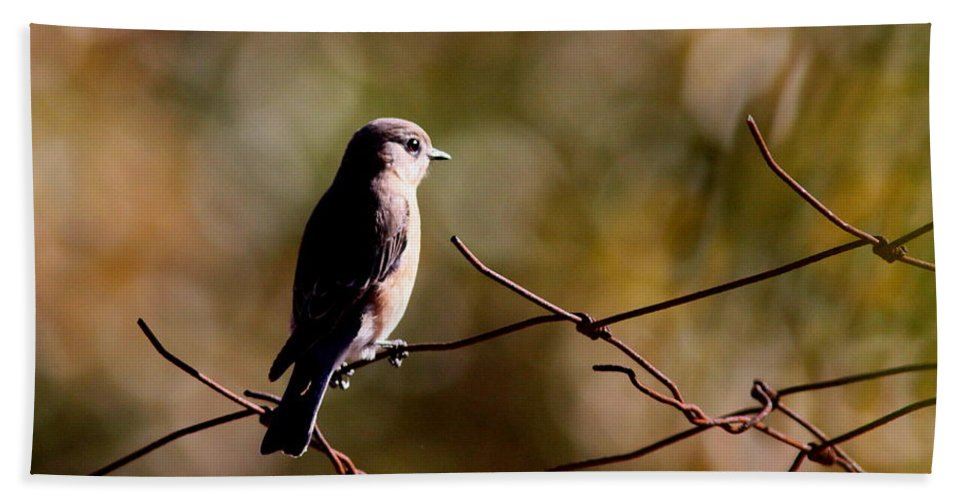 Bluebirds Beach Towel featuring the photograph On The Arbor by Travis Truelove