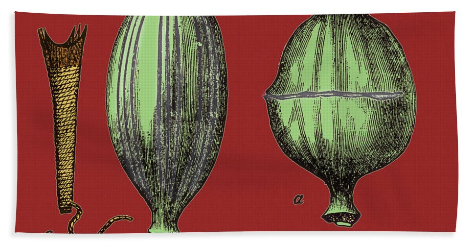 Enhanced Beach Towel featuring the photograph Opium Harvesting by Science Source