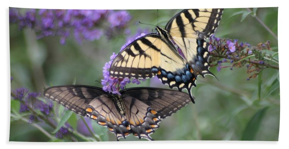 Butterflies Beach Towel featuring the photograph Opposites Attract by Living Color Photography Lorraine Lynch