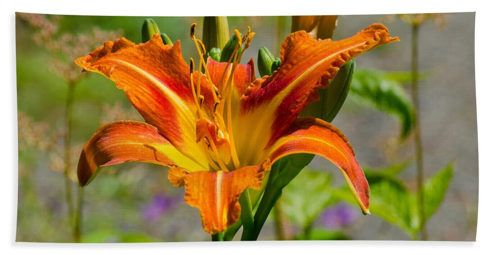Red Beach Towel featuring the photograph Orange Day Lily by Tikvah's Hope
