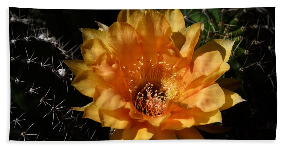 Orange Flower Beach Towel featuring the photograph Orange Echinopsis Flower by Saija Lehtonen