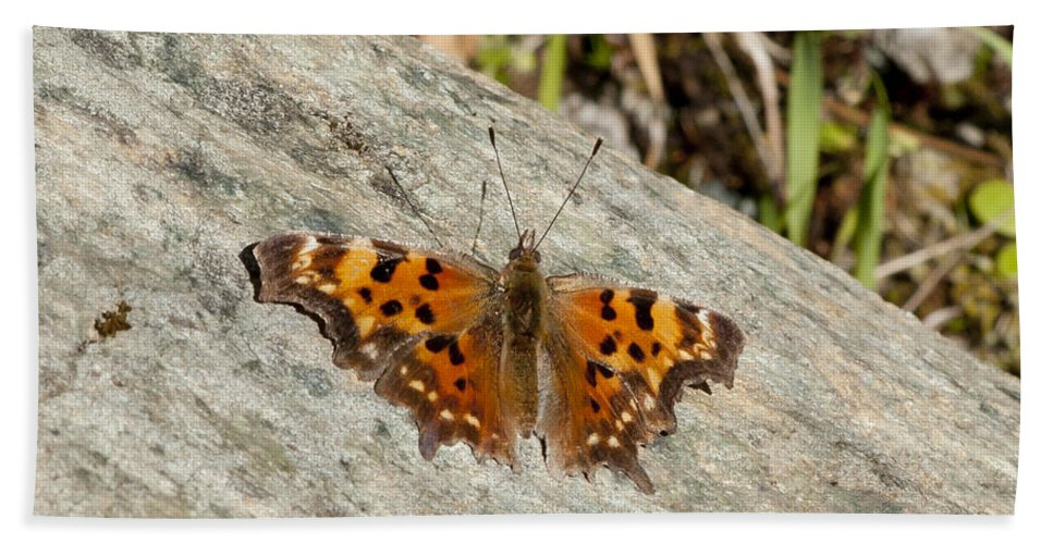 Moth Beach Towel featuring the photograph Orange Moth by Betty Depee