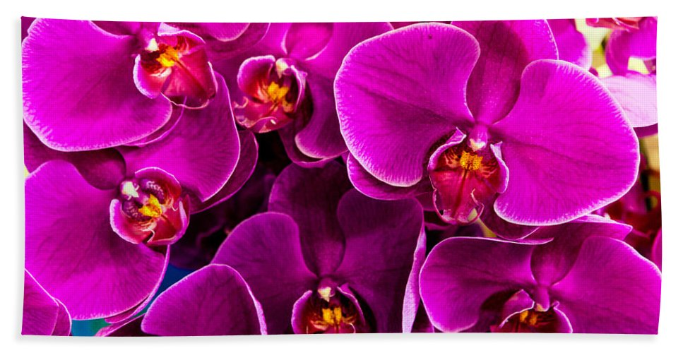 Orchids Beach Towel featuring the photograph Orchids A Plenty by Christopher Holmes