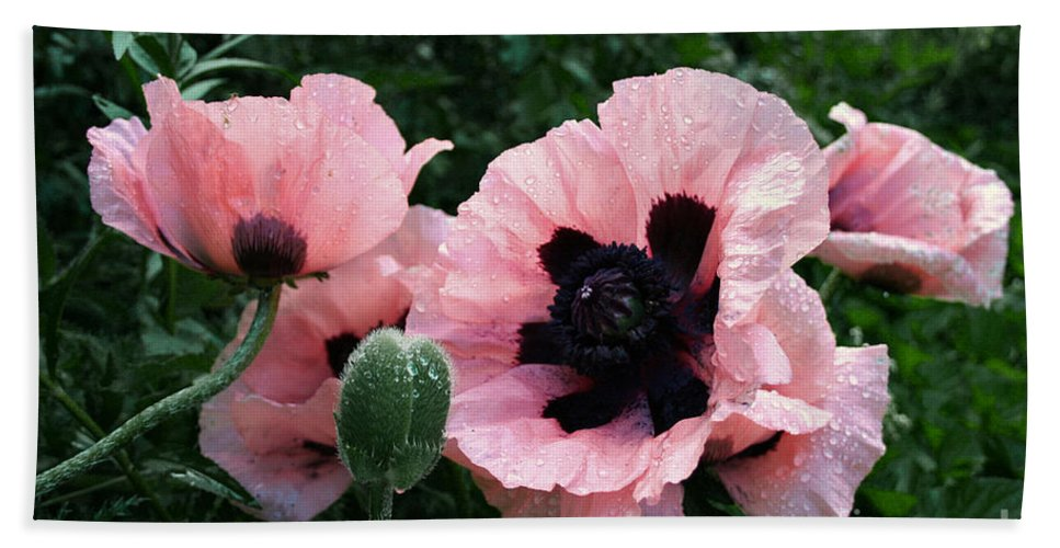 Flowers Beach Towel featuring the photograph Oriental Poppies by Barbara McMahon